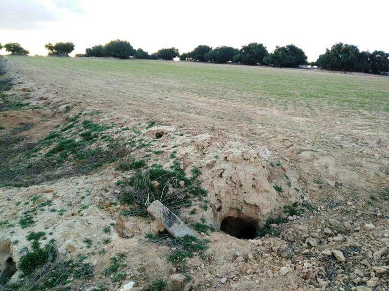 La plaga de conejos provoca 3 millones de euros de pérdidas en la provincia de Burgos